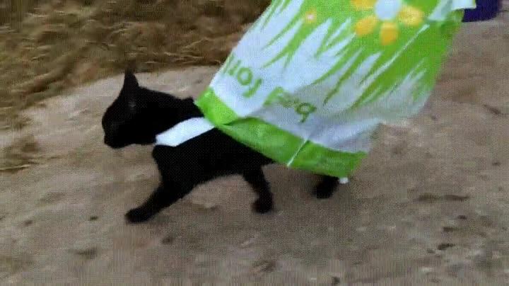 Enlace a Gatos que creen ser superhéroes