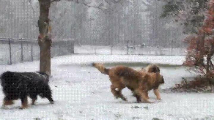 Enlace a Su primer día de nieve ♥
