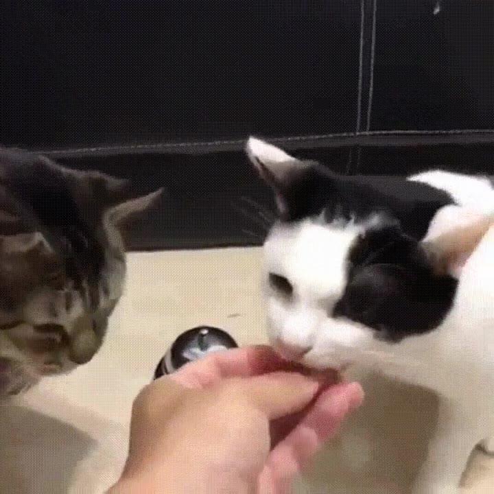 Enlace a Gatos que han aprendido a hacer sonar la campana cada vez que tienen hambre