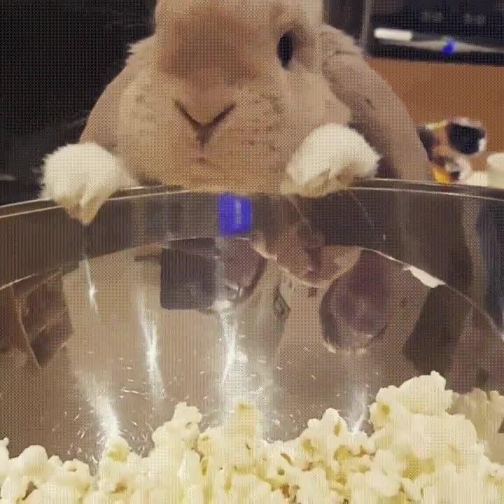 Enlace a Para mi conejo el mejor plan es comer palomitas y ver una buena peli