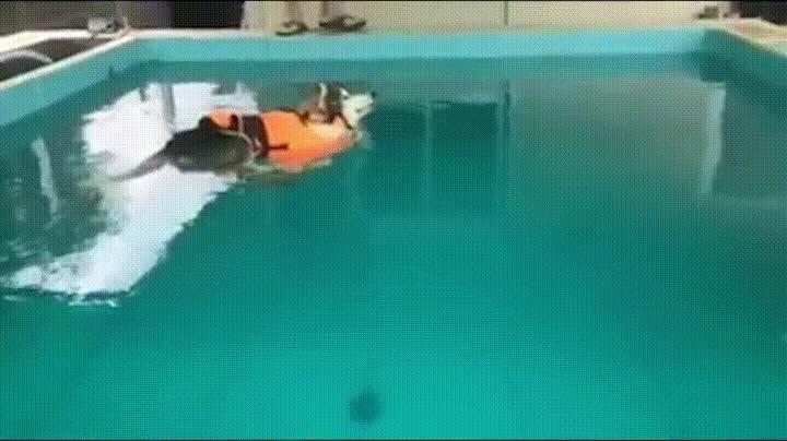 Enlace a ¿Para qué voy a nadar pudiendo flotar?