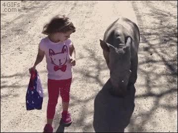 Enlace a Ella insistió en que quería un rinoceronte de mascota