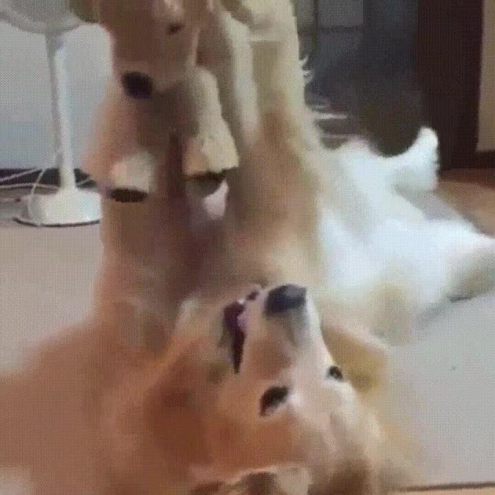 Enlace a El mejor regalo que le puedes hacer a tu perro es un clon de peluche