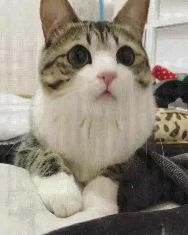 Enlace a Gato.exe ha dejado de funcionar. Necesita un reinicio