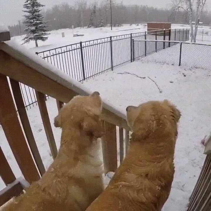 Enlace a No hay nada como disfrutar de un día de nieve en compañía de tu mejor amigo