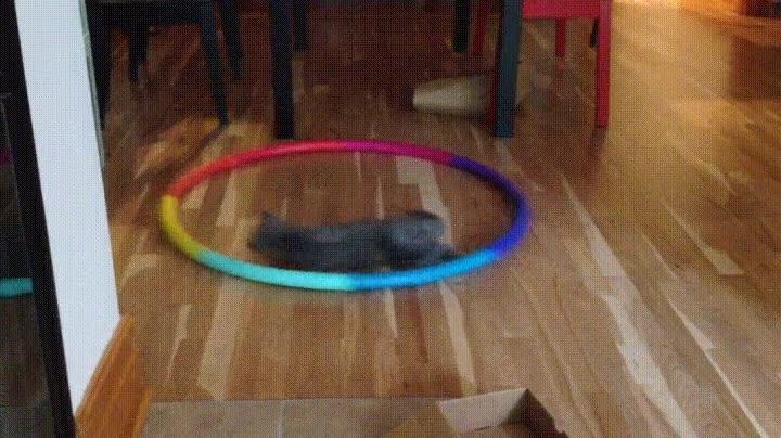 forma,gato,mejor,ocupado,tener