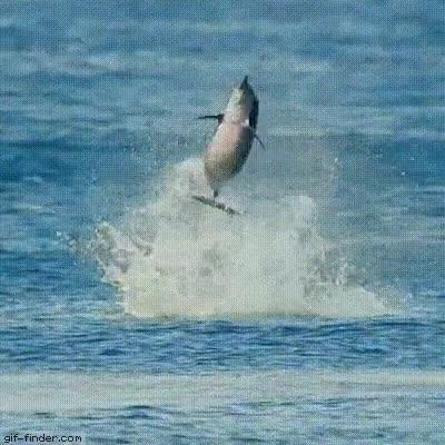 Enlace a Rotación: Nivel delfín