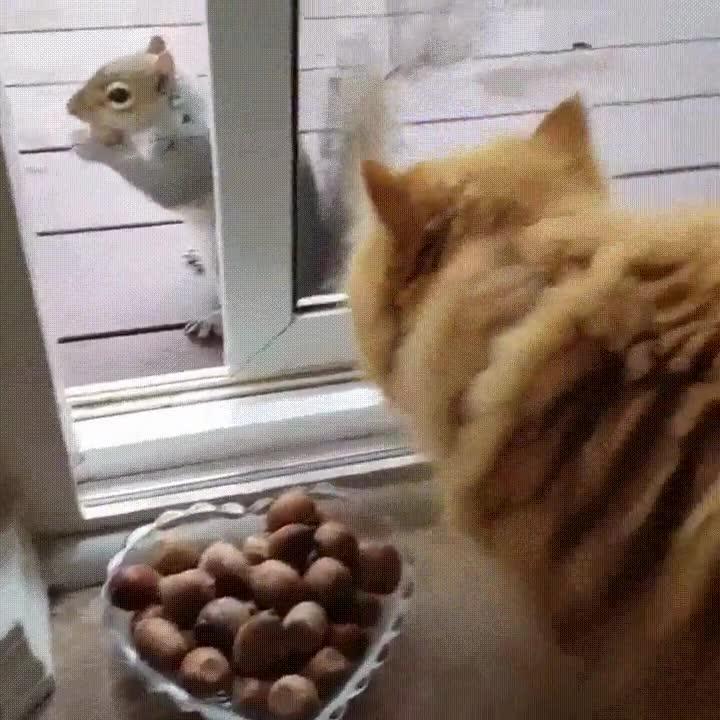 Enlace a Nada como colocar unos dulces delante de la puerta de casa para hacer nuevos amigos