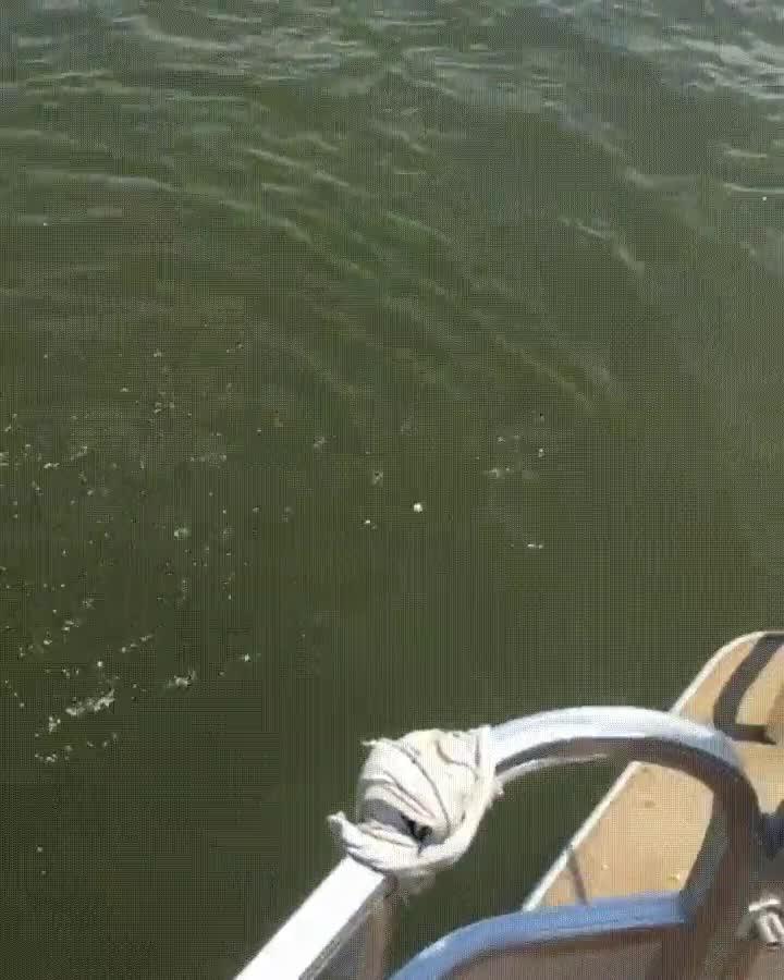 Enlace a Si vas a Zimbabue nunca te tires al agua sin comprobar si hay algún monstruo marino cerca