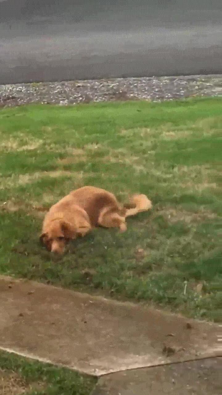Enlace a Cuando pillas a tu perro haciendo un agujero en el jardín y encima intenta disimular