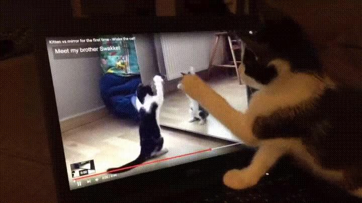 Enlace a Gato viéndose en un vídeo. Gatoception