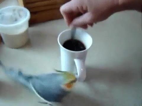 Enlace a La forma más sencilla de poner contento a tu pájaro