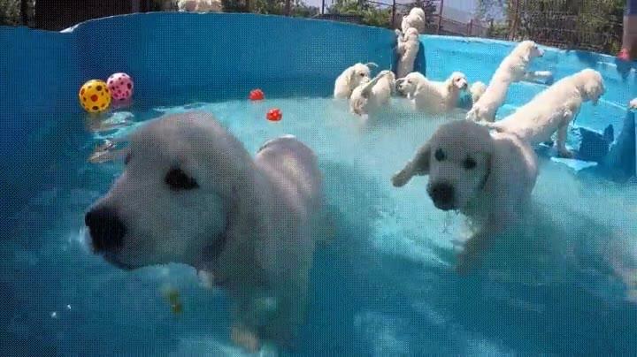 Enlace a La patrulla canina ha montado una fiesta en la piscina