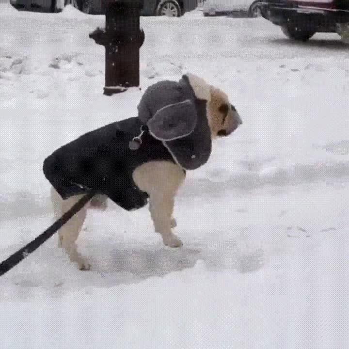 Enlace a Algunos están tremendamente contentos de que haya llegado la nieve