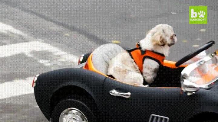 Enlace a Perros que han decidido independizarse y no ser paseados nunca más