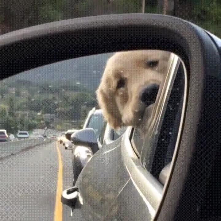 Enlace a Cuando el tráfico te hace preguntarte si realmente eres un buen chico