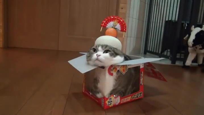 Enlace a Nadie puede ver a este gato perfectamente camuflado con el entorno