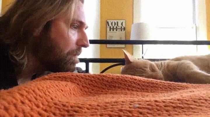 Enlace a Ahora soy yo el que despierta a mi gato. Venganza
