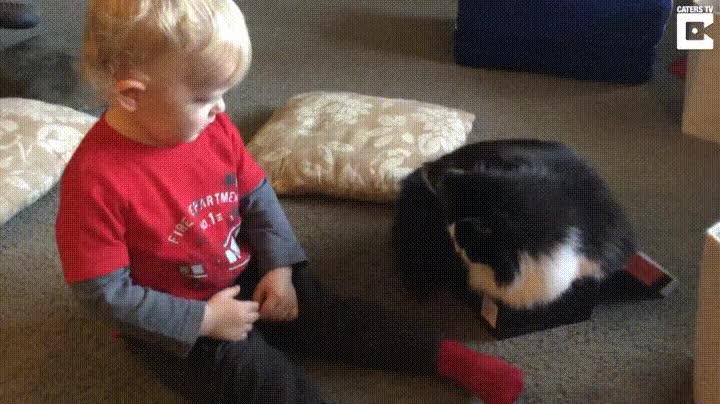 Enlace a Humanos que imitan a sus gatos de compañía