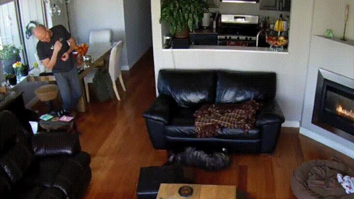 Enlace a Cuando tu perro se está pegando la madre de todas las siestas en el sofá de casa y pasa lo inevitabl