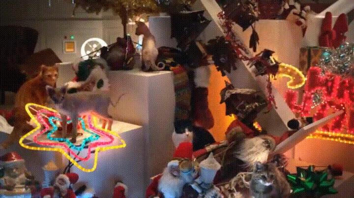 Enlace a La mejor Navidad de todas