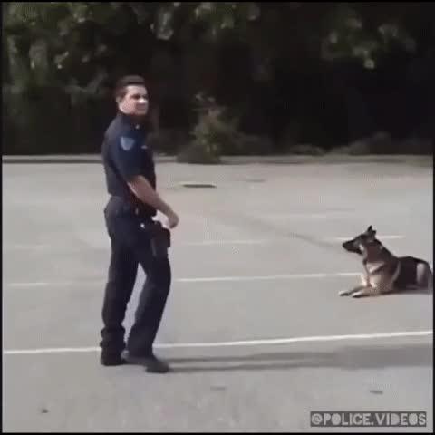 Enlace a Los perros de la policía cada vez son más inteligentes