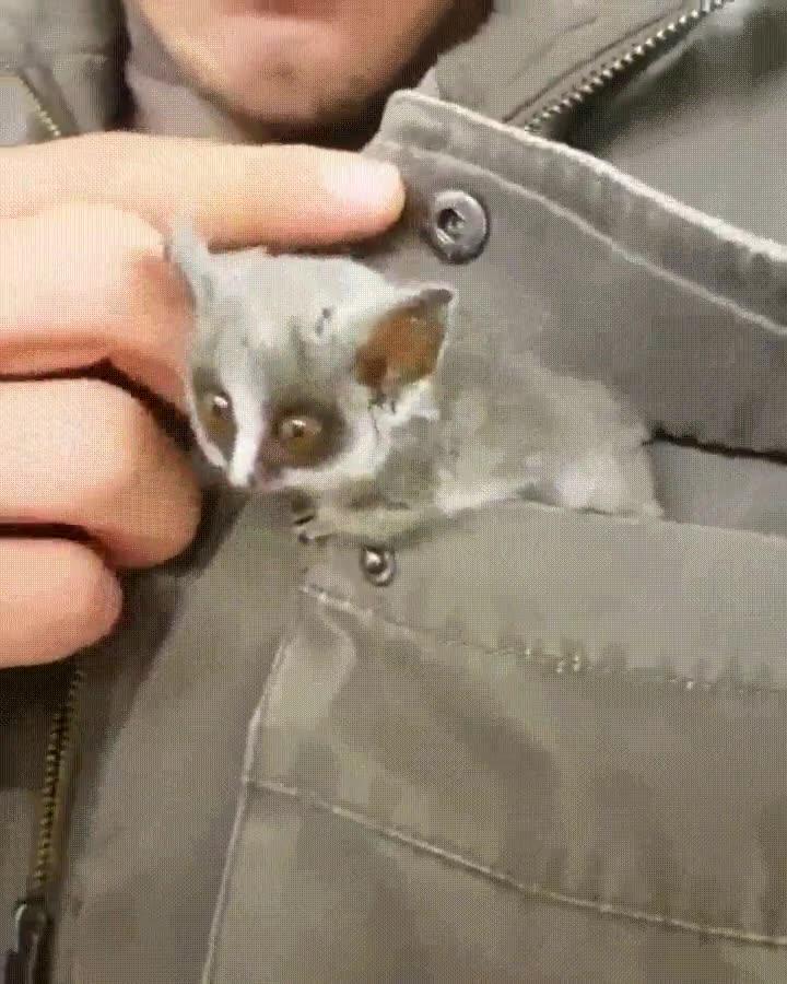 Enlace a Animales fantásticos y dónde encontrarlos