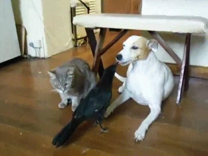 Enlace a Hora de dar de comer a las mascotas de casa