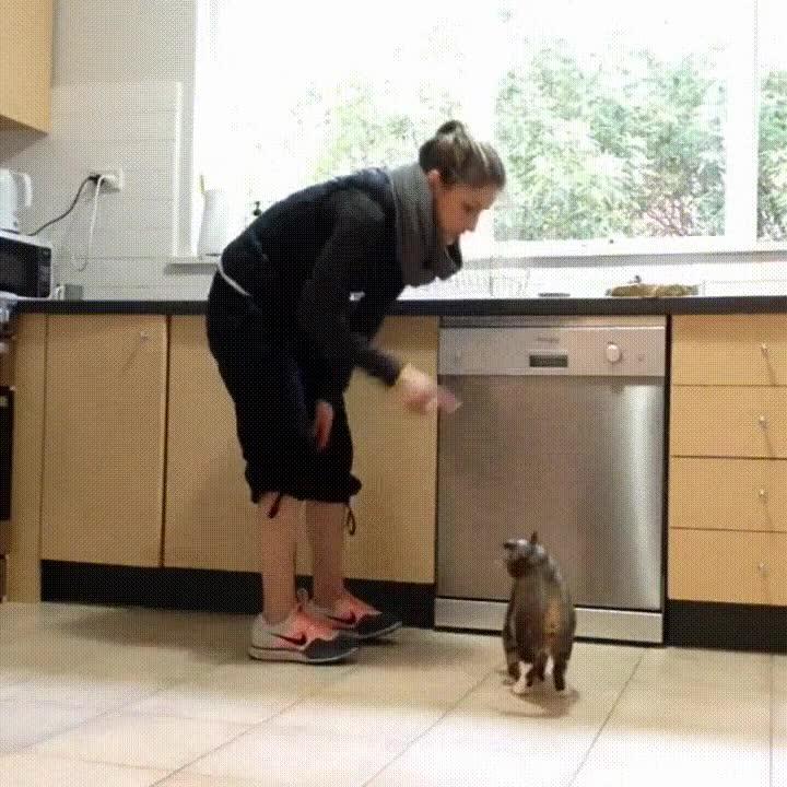 Enlace a ¿Quién ha diho que los gatos no pueden aprender algunos trucos?