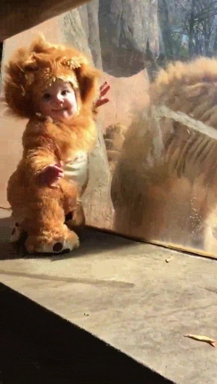 Enlace a Nadie puede resistir la adorabilidad de un bebé disfrazado de león