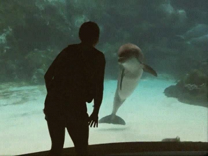 Enlace a Delfín impresionado con la flexibilidad de una humana