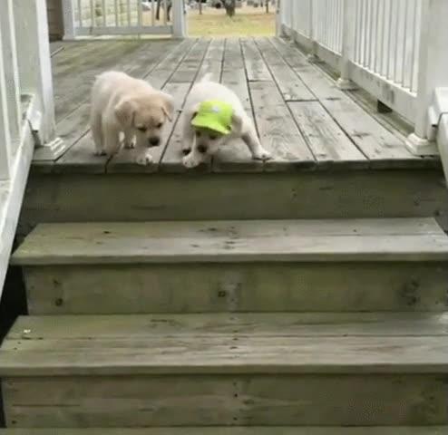 Enlace a Cachorros aprendiendo el ancestral arte de subir y bajar escaleras