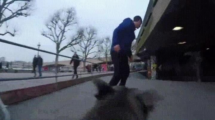 Enlace a Perros que demuestran ser capaces de grabar a humanos haciendo skateboard