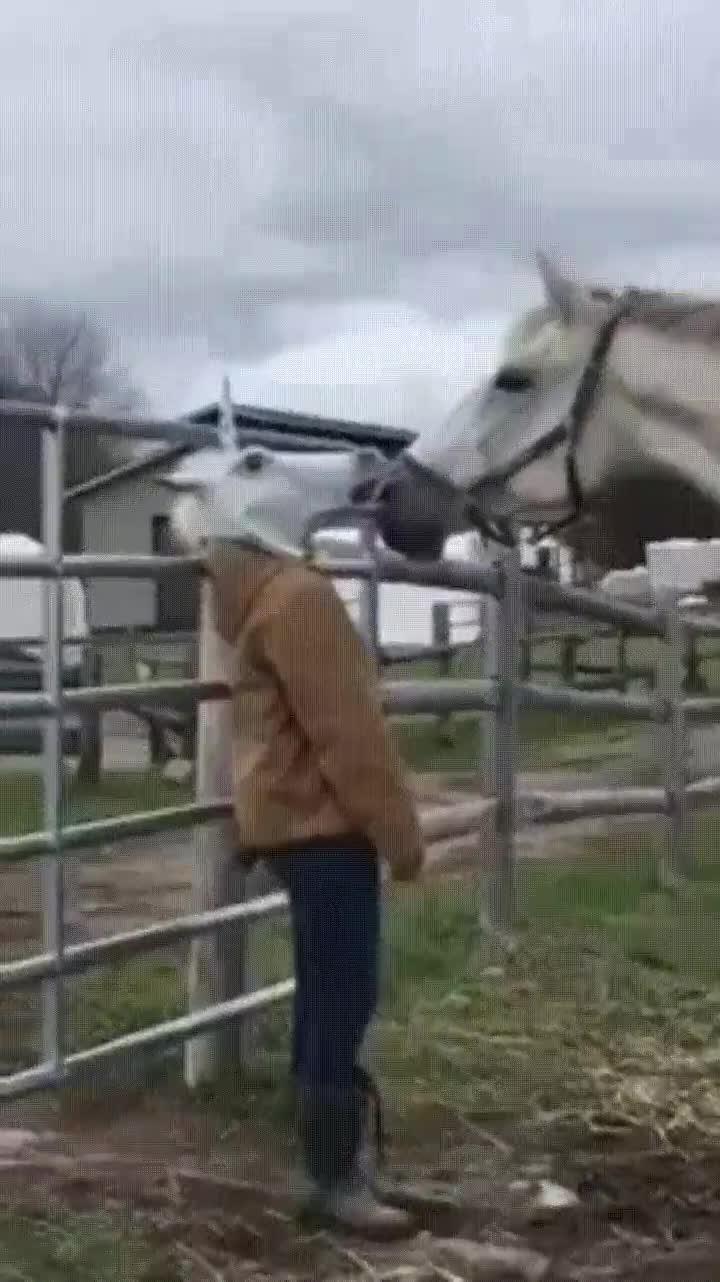 Enlace a Jugando con los sentimientos de un caballo y rompiéndole el corazón