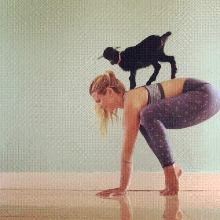 Enlace a Haciendo ejercicio con la ayuda de una cabra