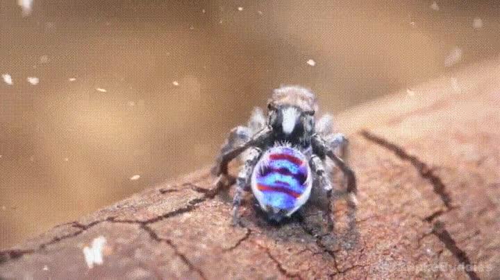 Enlace a Dan un poco de miedo pero en el fondo las arañas son así de encantadoras