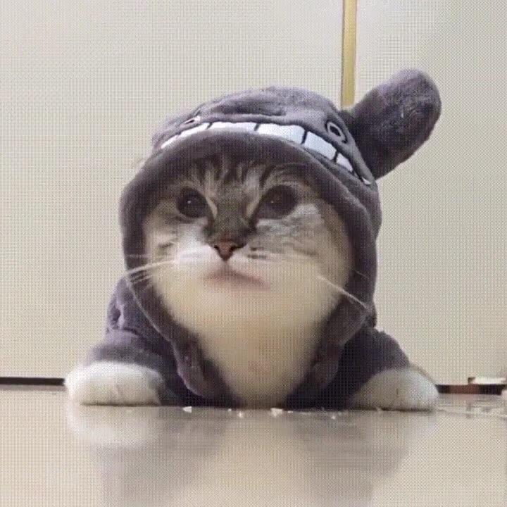 Enlace a Gatos que saben vestir con estilo