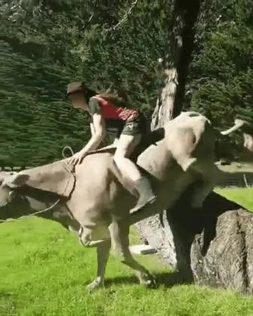 Enlace a Vacas que fueron caballos en otra vida anterior