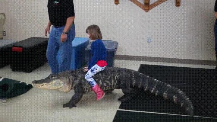 Enlace a Cuando tu sueño de la infancia es montar sobre un caimán