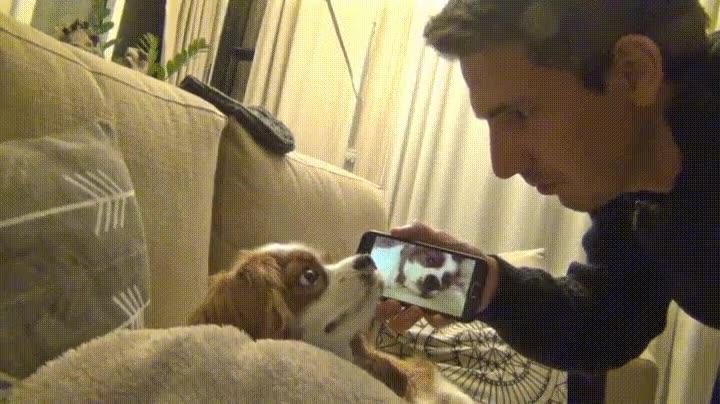 Enlace a La cara que se le queda a tu perro cuando le enseñas cómo ronca