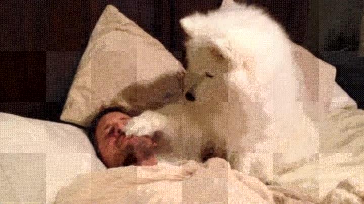 Enlace a Perro despertando a su dueño de la forma más adorable