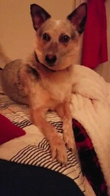 Enlace a Perros que dan miedo cuando duermen pero cuando se despiertan son adorables