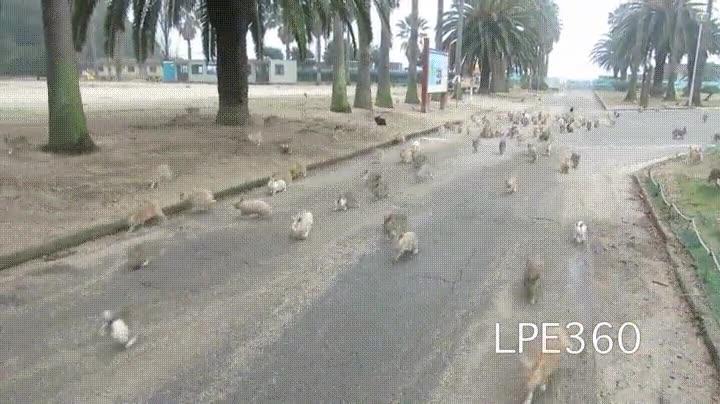 Enlace a Conejos comportándose como palomas