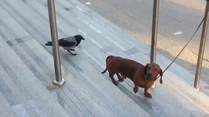 Enlace a Pájaros que viven al límite