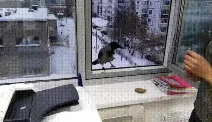 Enlace a Nunca dejes que un pájaro entre en tu casa. Nunca sabes que podrían hacer