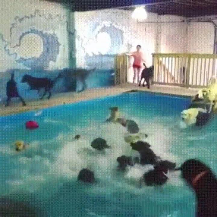 Enlace a La patrulla canina disfrutando de un día de piscina