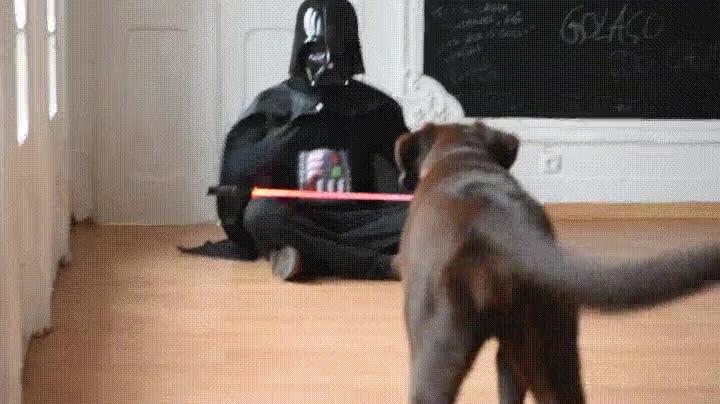 Enlace a Perros que acaban cediendo al Lado Oscuro de la Fuerza