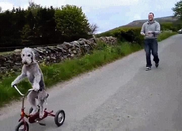 Enlace a Perro en bici con más estilo del que tendrás nunca