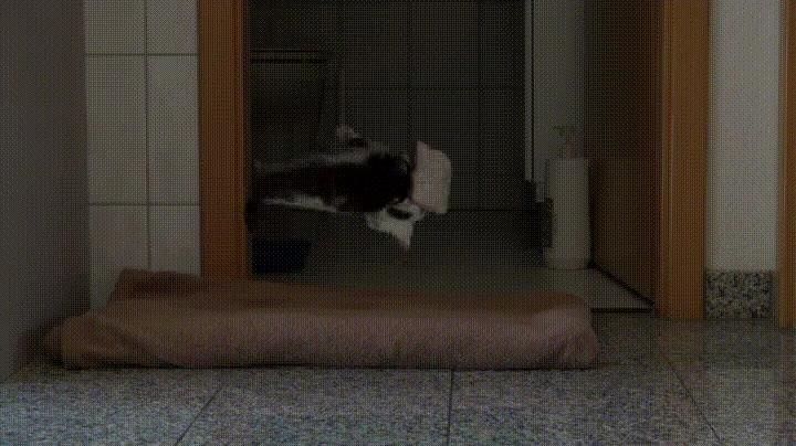 Enlace a Haciendo experimentos con mi gato y una tostada