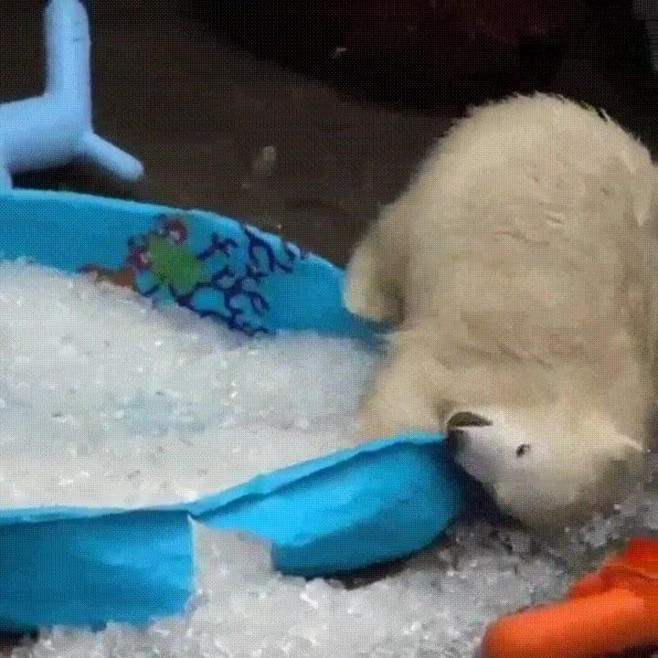 Enlace a Una piscina y un poco de hielo. No necesito nada más para ser feliz
